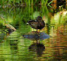 Monopod Duck by vanStaffs
