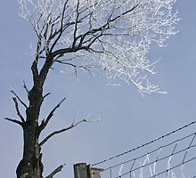 Low angle view of  an Ice covered tree and fence by DMHImages