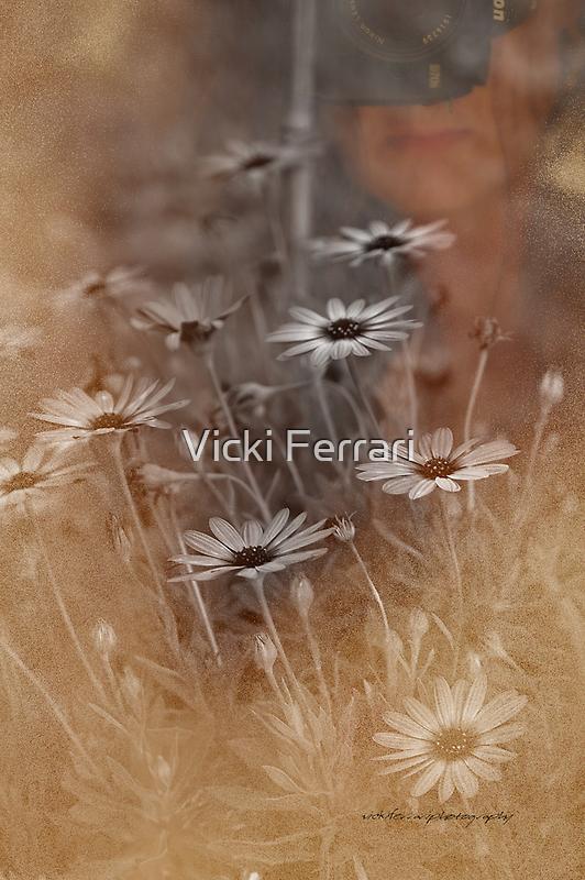 Nikon Daisies © Vicki Ferrari Photography by Vicki Ferrari