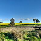 Rural Pano by GailD