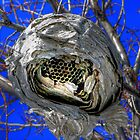Wasp&#x27;s Nest by Larry Trupp
