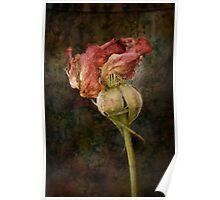 Rust n Roses ~ #13 Poster