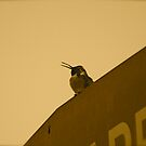 Hummingbird fun 2 by Bonnie Pelton