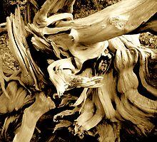 Wood Stump Tree Design by Jonathan  Green