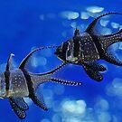 Little Fish by Robert Abraham