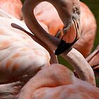 San Diego Flamingo by Kirstyshots