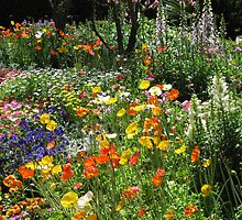 Poppies and more flowers under a tree. Laurel Bank Park, Toowoomba,Qld,Australia by Marilyn Baldey