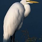 Great Egret - Morning Light by Dennis Stewart