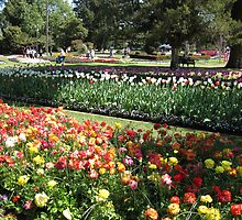 Some of the gardens at Queens Park, Toowoomba,Qld.Australia by Marilyn Baldey
