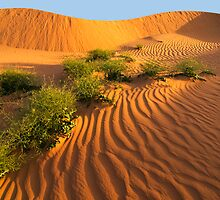 Dunes in morning Sun by Hans Kawitzki
