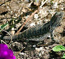 Basking Lizard by Fred  Smith