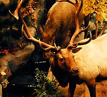 THE MAJESTIC BULL ELK by Michael Beers