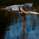 Heron Intimacy by David Friederich