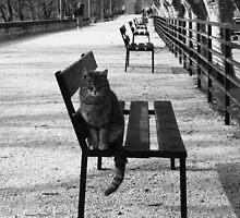 """6.00 AM en Provence"" by STEPHANIE STENGEL   STELONATURE PHOTOGRAHY"