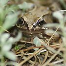 Frog in the undergrowth by Glen Ricketts