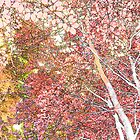 Autumn in the forest by Sandra O'Connor