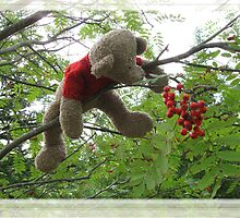 Bear Berries by L J Fraser