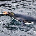 Penguin by Nick Potts