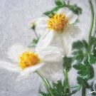Little White Wildflowers 4 by Christopher Johnson