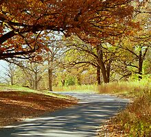 Autumn Country Drive by Linda Miller Gesualdo