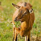 Like a Bambi by Milos Markovic