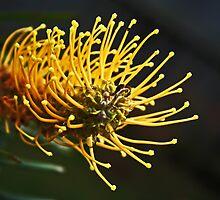 Yellow Grevillea by Evita