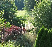 Gourley Garden  (Anole Habitat)  Grasses and Evergrees by JeffeeArt4u