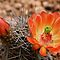 Desert Blooms by Marita Sutherlin