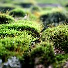 Moss by Sara Johnson