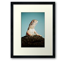 Central Netted Dragon (Ctenophorus nuchalis) Framed Print