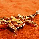 Thorny Devil (Moloch horridus) by Shannon Benson