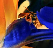 bee in flower  by oko-jumu