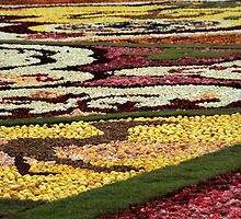 Flower Rug, in Tel-Aviv by Nira Dabush