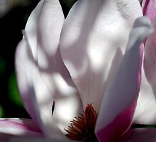 Serene Magnolia by Lozzar Flowers & Art