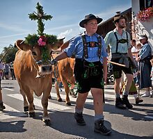 When the Cows Come Home by Boston Thek Imagery