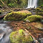 Beauchamp Falls Great Otway National Park Victoria Australia  by Lee Duguid