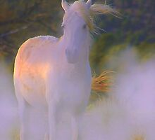 WHITE LADY  by Jeanne  Nations