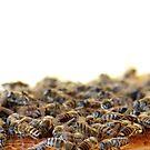 Bees n Honey by TriciaDanby