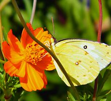 Yellow And Orange by R&PChristianDesign &Photography