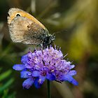 Butterfly by Milos Markovic