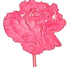 Red Carnation by Sandra O'Connor
