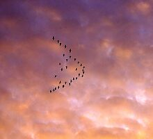 Geese in formation, sunset, Eugene, Oregon by Allan  Erickson