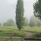 Misty farmland, Northland by Paul Mercer