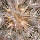 Dandelion Seeds Macro by Detlef Becher