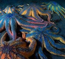A Herd Of Sea Stars by Greg Amptman