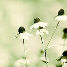 Summer Green by BryanLee