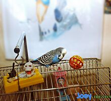 Joey The Stunt Budgie by ADzArt