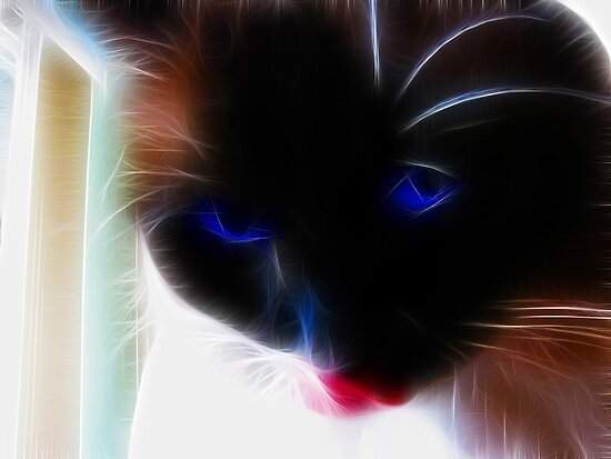 Baby Blue Eyes..... by maxy
