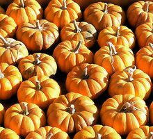 Mini Pumpkins by shuttertothink