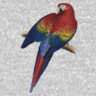 Illustration of A Scarlet Macaw Isolated On White by taiche